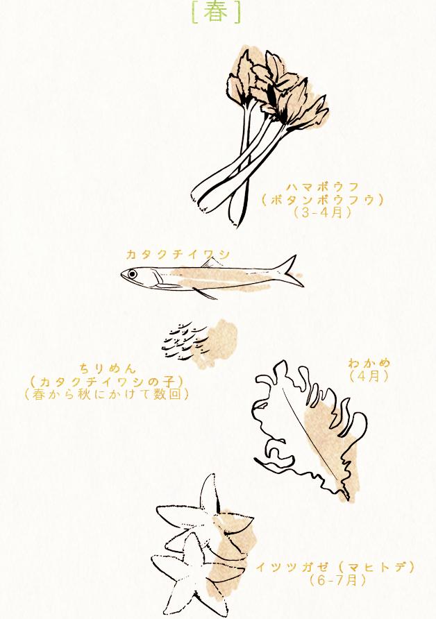 [春] ハマボウフ(ボタンボウフウ)(3-4月) カタクチイワシ ちりめん(カタクチイワシの子)(春から秋にかけて数回)わかめ(4月)イツツガゼ(マヒトデ)(6-7月)