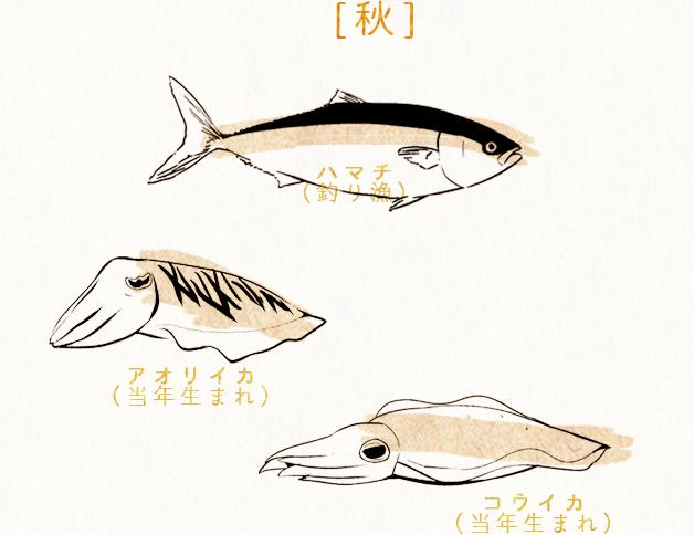 [秋] ハマチ(釣り漁)アオリイカ(当年生まれ)コウイカ(当年生まれ)
